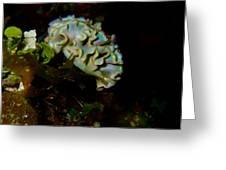 Lettuce Sea Slug Greeting Card