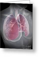 Lungs Greeting Card