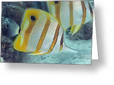 Malaysia Marine Life Greeting Card