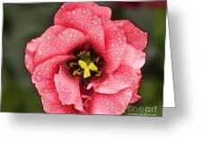 Nice Flower Greeting Card