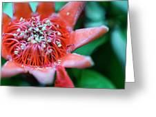 Royal Botanical Garden Of Madrid Greeting Card