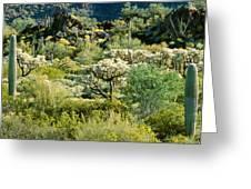 Saguaro Cactus Carnegiea Gigantea Greeting Card