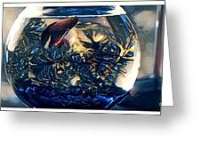 Siamese Fighting Fish Greeting Card