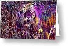 Tiger Predator Fur Beautiful  Greeting Card