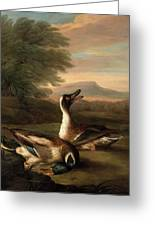 Two Drakes In Landscape Greeting Card