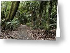 Walking Trail Greeting Card