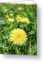 Yellow Dandelion Flowers Greeting Card