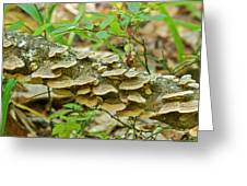 Polypores 9155 Greeting Card
