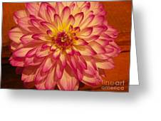 #928 D855 Dahlia Close Up Greeting Card