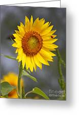 #933 D958 Best Of Friends Colby Farm Sunflowers Newbury Massachusetts Greeting Card