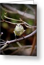 9343-00-ruby-crowned Kinglet Greeting Card