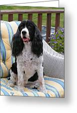 #940 D1034 Farmer Browns Springer Spaniel Greeting Card