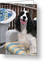 #940 D1036 Farmer Browns Springer Spaniel Happy For You Have A Happy Day Greeting Card