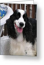 #940 D1038 Farmer Browns Springer Spaniel Adorable Happy Greeting Card