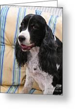 #940 D1043  Farmer Browns Springer Spaniel Smile Hidden Heart Greeting Card