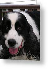 #940 D1049 Farmer Browns Springer Spaniel Greeting Card