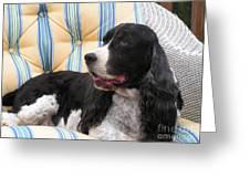 #940 D1054 Farmer Browns Springer Spaniel Greeting Card