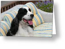 #940 D1066 Farmer Browns Springer Spaniel Happy Greeting Card