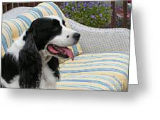940 D1069 Farmer Browns Springer Spaniel Greeting Card