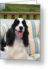 #940 D1088 Farmer Browns Springer Spaniel Greeting Card