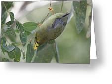 Bellbird Greeting Card