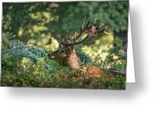 Majestic Powerful Red Deer Stag Cervus Elaphus In Forest Landsca Greeting Card