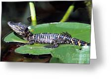 A Baby Alligator Resting On A Lilly Pad Greeting Card