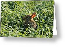 A Baby Cottontail Rabbit Sits Among Greeting Card