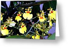 A Ballet Of Tiny Orchids Greeting Card
