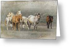 A Band Of Horses Greeting Card