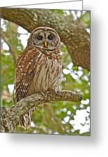 A Barred Owl Greeting Card