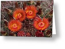 A Barrel Cactus Is Blooming Greeting Card