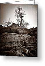 A Barren Perch - Sepia Greeting Card by Christopher Holmes