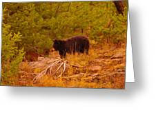 A Bear Staring At Something Greeting Card