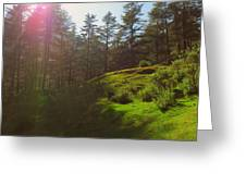 A Beautiful Day In Woods Greeting Card