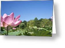 A Beautiful Emperor Lotus Blooms Greeting Card
