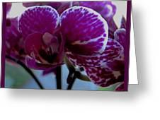 A Beautiful Flower Greeting Card