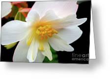 A Beautiful Heart 4 Greeting Card