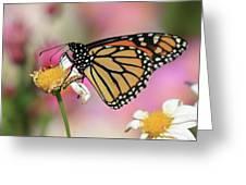 A Beautiful Monarch Greeting Card
