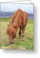 A Beautiful Red Mane On An Icelandic Horse Greeting Card