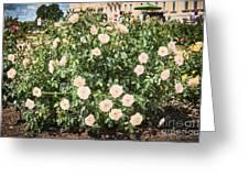 A Beautiful Rose Bush Castle Park 6 Greeting Card