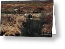 A Beaver's Work Greeting Card