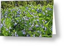 A Bed Of Bluebells Greeting Card