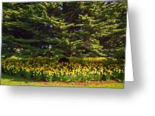 A Bed Of Narcissus Greeting Card