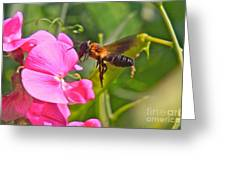 A Bee I Cee Greeting Card