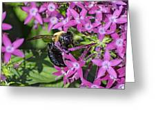 A Bee See Greeting Card