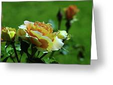 A Benton City Rose  Greeting Card