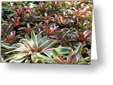 A Bevy Of Bromeliads Greeting Card