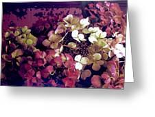 A Bevy Of Hydrangeas  Greeting Card