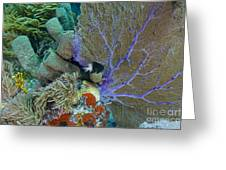 A Bi-color Damselfish Amongst The Coral Greeting Card